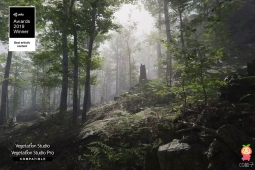 Forest Environment - Dynamic Nature 1.6.2 森林场景模型
